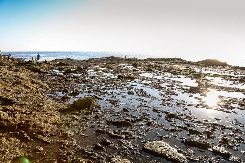 orange county beach life photography-2