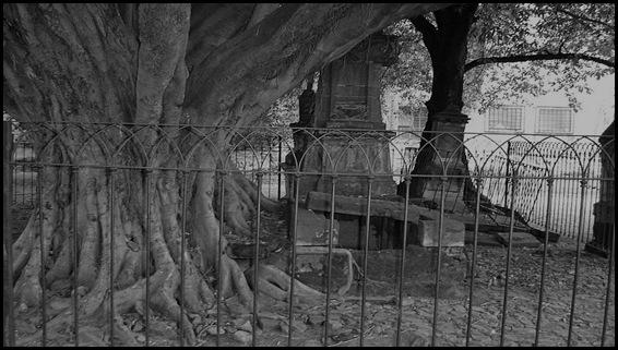 El árbol del vampiro