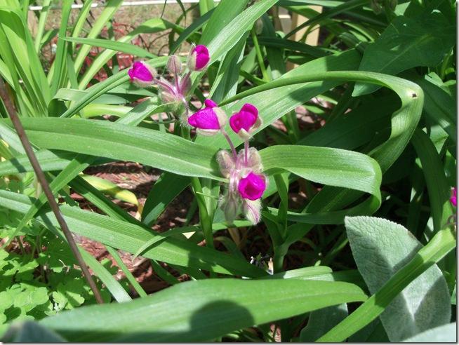 Outdoor2011spring 031