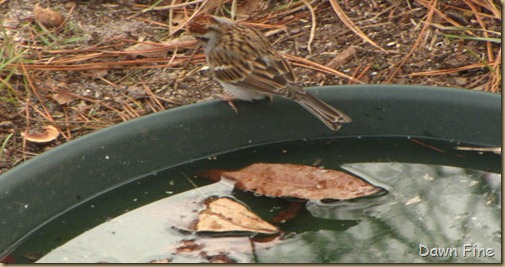 Feeder birds_032