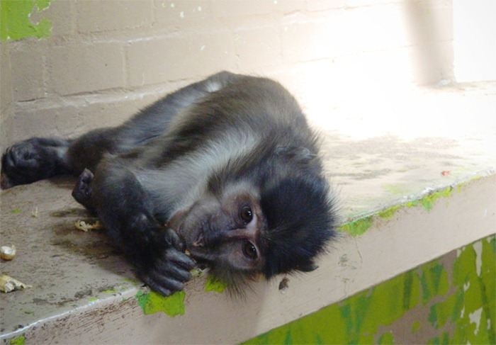 monkey4