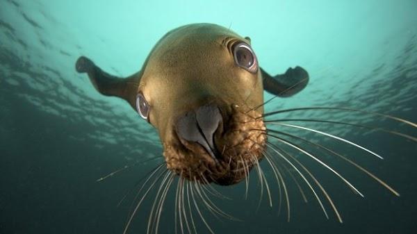 fotos animais foca[7].jpg