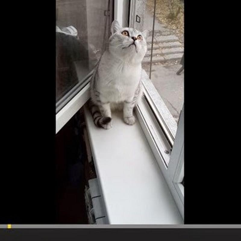 Εστιασμένη γάτα