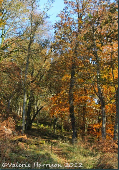 13-Autumn-woodland