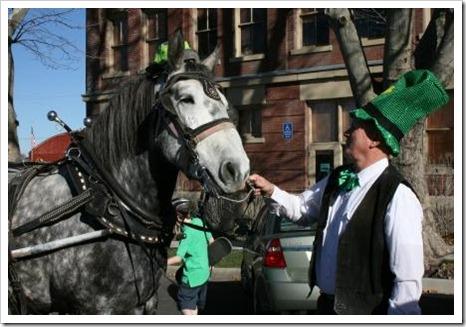 2007_St_Pats_parade_horse_web