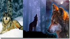 wolf2 samsung star wallpaper