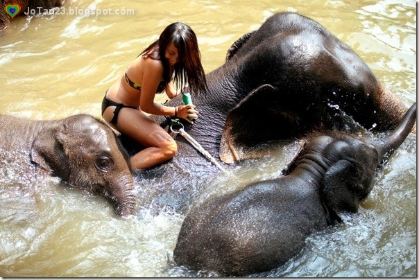 things-to-do-in-chiang-mai-patara-elephant-farm-swimming-with-elepants