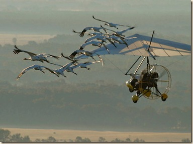 cranes-blog480
