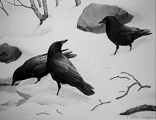 9. Crows by RV Clem-kab