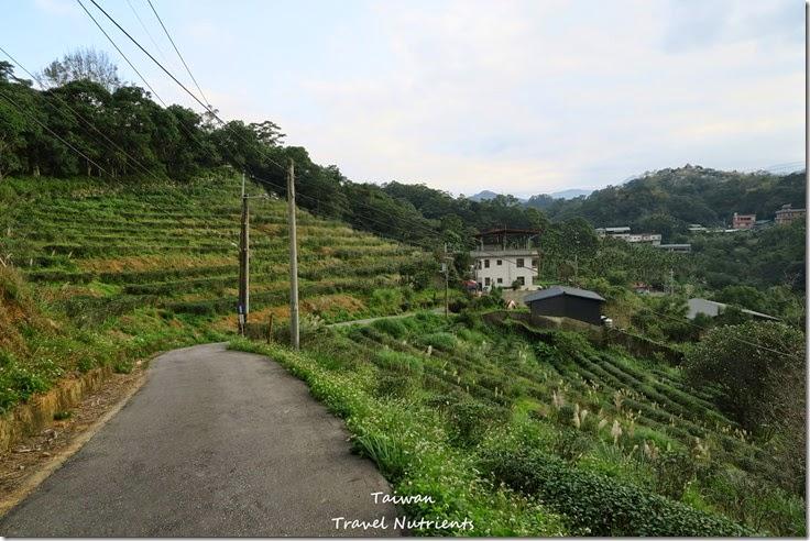 新店 文山農場 (43)
