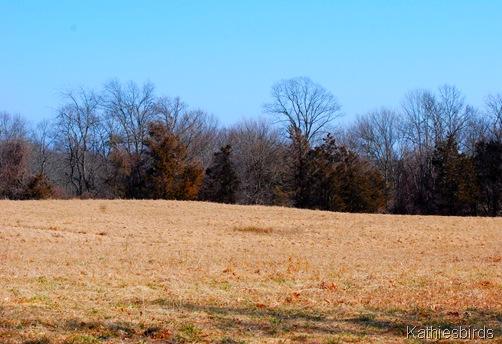 6. farm field-kab