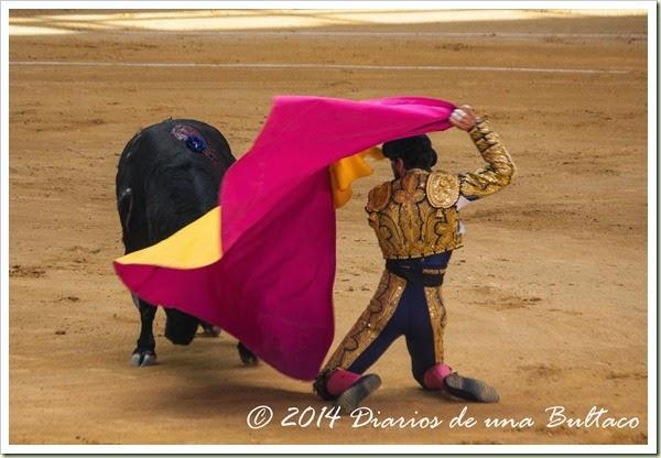 Toros 2014 (1)-4