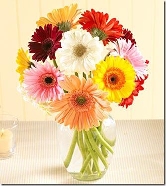 san valentin flores (19)