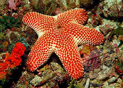Amazing Pictures of Animals, Photo, Nature, Incredibel, Funny, Zoo, Starfish, Sea Stars, Asteroidea, Alex (23)