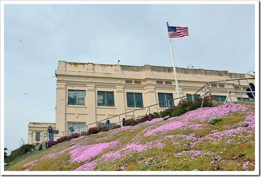 120408_Alcatraz_Drosanthemum-floribundum_02