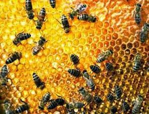 Amazing Pictures of Animals, Photo, Nature, Incredibel, Funny, Zoo, Bee, Insetcs, Anthophila, Alex (9)
