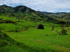 Colombia is the greenest place we`ve ever seen.