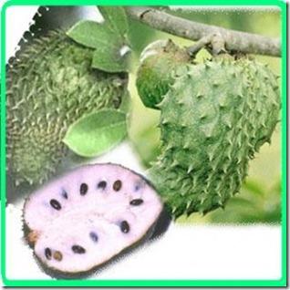 Kelebihan Khasiat Buah Durian Belanda (Graviola)