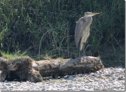 Heron in bone dry pond