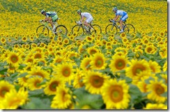 cyclists-sunflowers_746555n