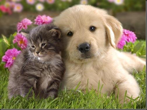 poze amuzante-catel si pisica