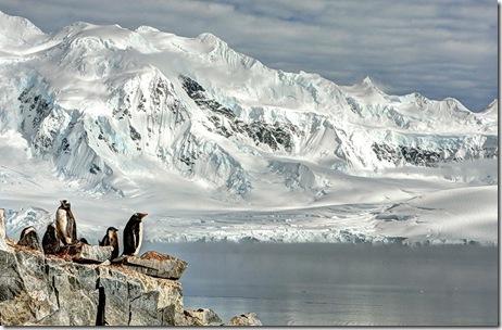 poze pinguini