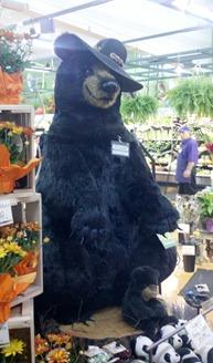 newport market bear