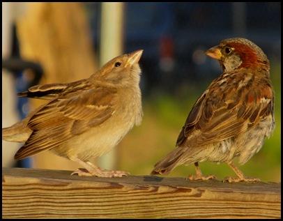birds0728 (3)