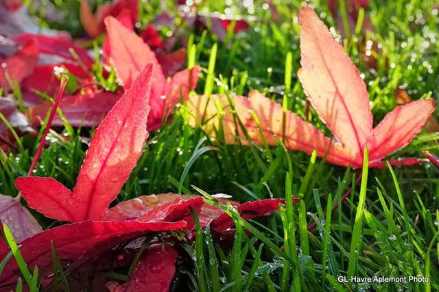 caucriauville automne 009