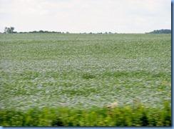 2122 Saskatchewan TC-1 East - flax crop fields