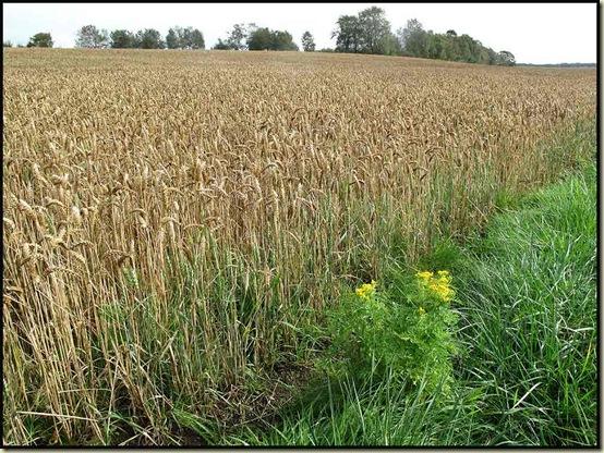 Field near Glaze Brook, Salford