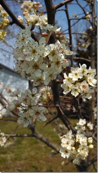 Spring 03 (4)