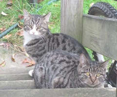 Stray kitties 11.2011 on porch steps