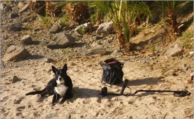 Blythe Detecting Dog  (2)