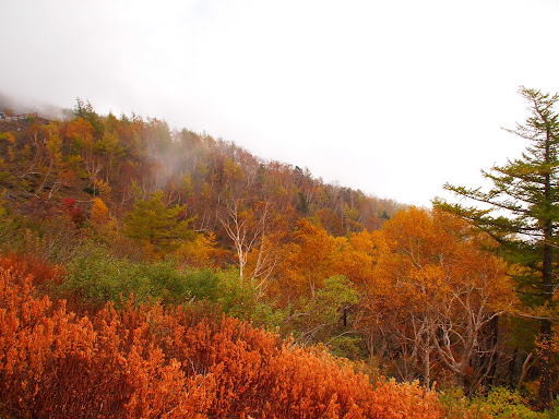[写真]富士山五合目からの景色