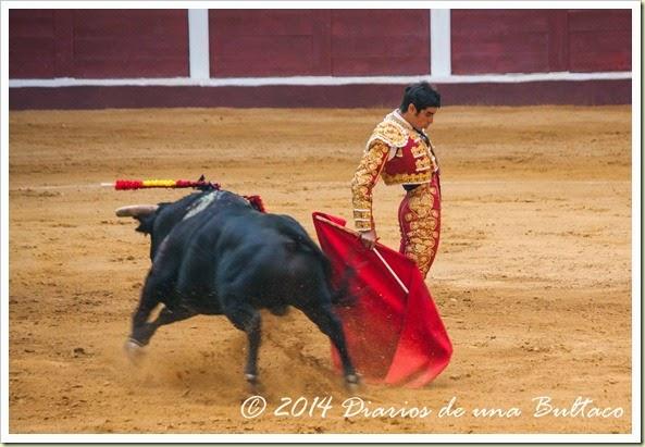 Toros 2014 (1)-48