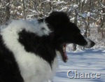 Chance yawning