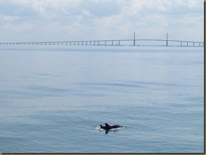 mama and baby dolphin at skyway