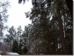 ice storm 2-15 002