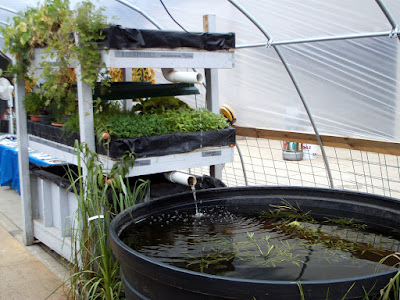 Aquaponics at the WI State Fair