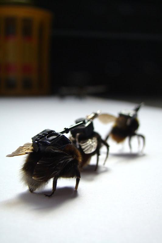 Exército de insetos 05