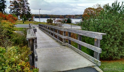 10-21-14 Footbridge at boat launch