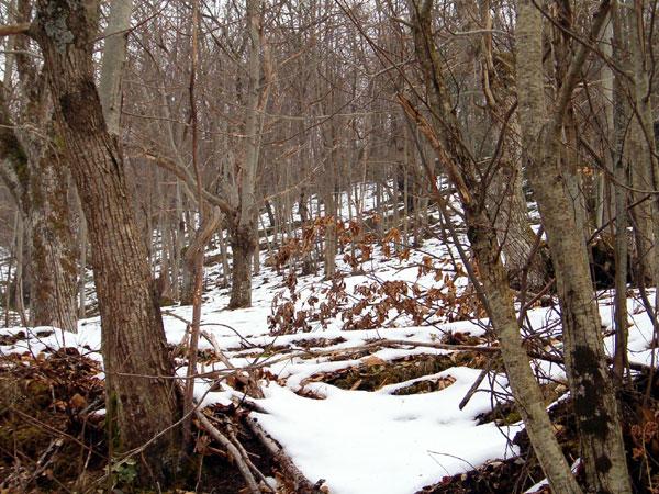 inverno_24_20101008_1546447423.jpg