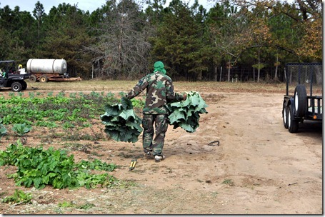 fall produce 1112 (39)