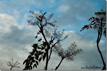 sky_20121018_silhouette
