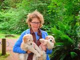 Labradoodle Breeder<br /> Melanie&#039;s GorgeousDoodles