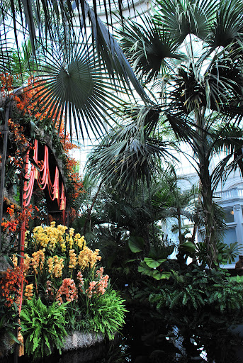 The NYBG has palms from around the world. They were a beautiful compliment to the orchids.
