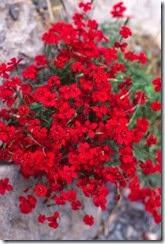 flores vermelhas 01