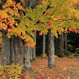 Fall Color at Bobs Lake and Campground / Upper Michigan