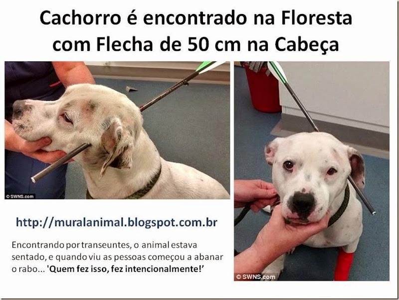 Cachorro é encontrado na Floresta com Flecha